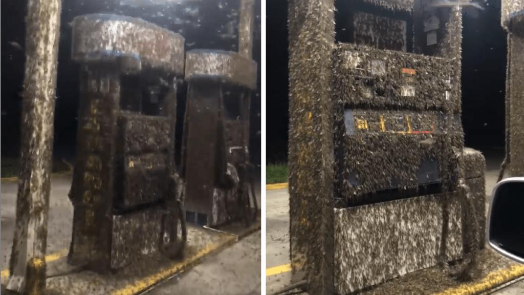 Videón, ahogy több százezer kérész száll meg egy benzinkutat