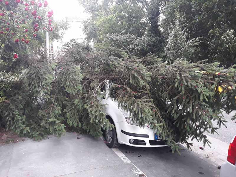 FOTÓK: A 11. kerületi Baranyai téren fákat döntött ki a vihar!