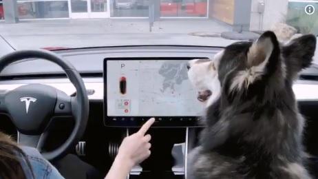 Videó – Kutyák életét mentheti meg a Tesla legújabb fejlesztése