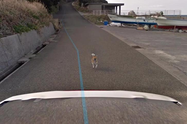 Egy kutya megkergette a Google autóját, a hajszát pedig a térkép is megörökítette