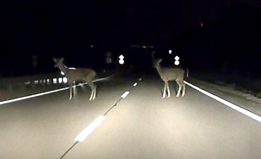 VIDEÓ: Országúti viszonylatban, nagy tempónál, tompított fényszóróval esélye sem lett volna olvasónknak