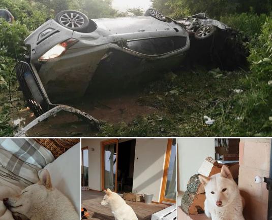 Megható rövid történet egy balesetben eltűnt, majd előkerült kutyáról