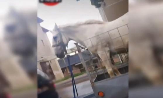 Videó – Szabálytalanul kikötözve nyitott utánfutón szállítottak egy lovat