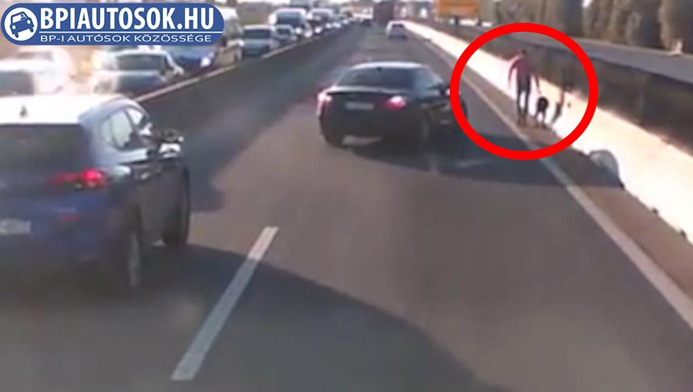 VIDEÓ: Kutyát mentettek meg arra autózók az M0-áson. Segítséget kérnek!