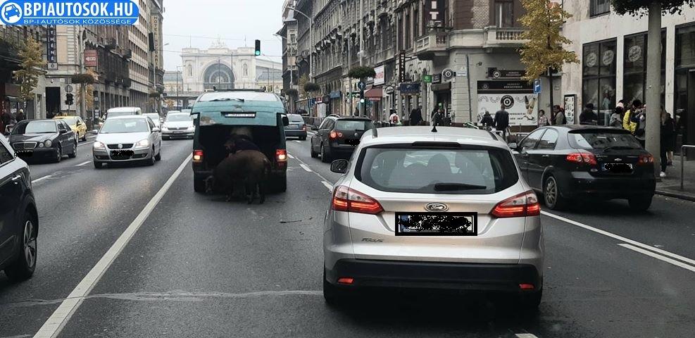 Fotó – Szabálytalan szállítás miatt állatok szöktek meg egy autóból a Rákóczi úton