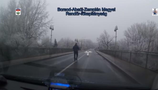 VIDEÓ: Ijedt hattyún segítettek a rendőrök Tokajnál