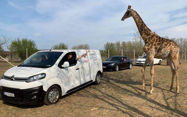 Autós szafaripark nyílik Magyarországon