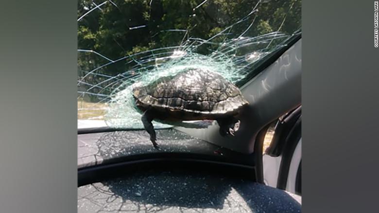 Nem mindennapi – Teknős csapódott egy autós szélvédőjébe egy georgiai autópályán