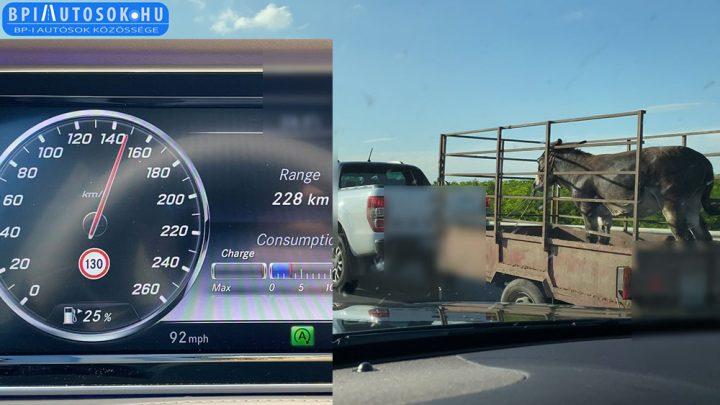 VIDEÓ: 150-nel szállította nyitott utánfutón a csacsit az M5-ösön