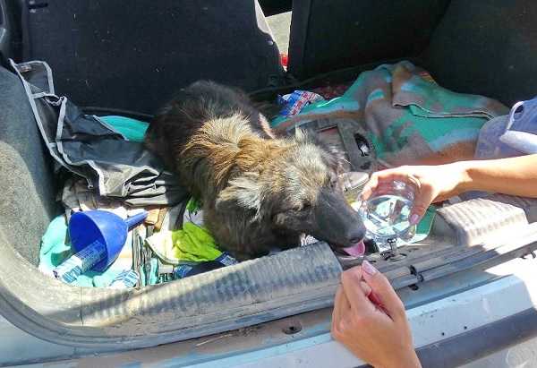 FOTÓK: 2 liter bort ivott mielőtt autóba ült a jogsi nélküli férfi – Egy kutya is volt a csomagtartóban
