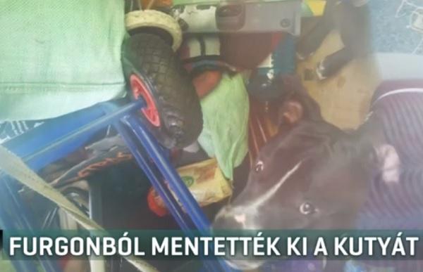 VIDEÓ: 51 fokos furgonból szabadítottak ki egy kutyát rendőrök Újpesten