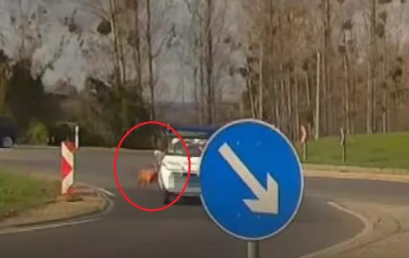 VIDEÓ: Kiesett egy kutya az autóból az egyik keszthelyi körforgalomban – Futott az autóval, mert beakadt a póráza