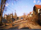 VIDEÓ: Páran újjászülettek ma délután Csömörön. Hatalmas fa dőlt az útra, amit egy teherautó rántott ki